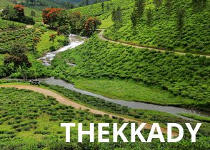Tea gardens and winding roads in the mountains of Thekkady hill station