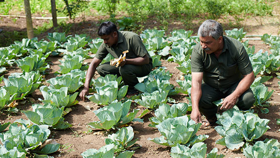 Gardeners at organic vegetable farm inside resort in Thekkady India