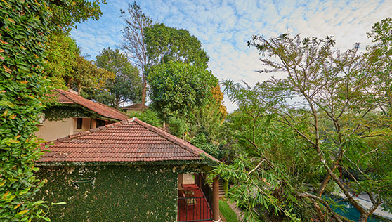 Green trees and plants inbetween villas at Cardamom County Thekkady