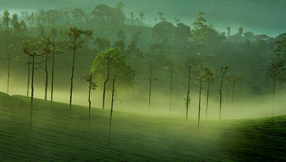 Misty mornings at tea gardens enroute to Thekkady India
