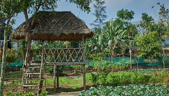Organic farm and vegetable garden inside the resort at Cardamom County Thekkady India