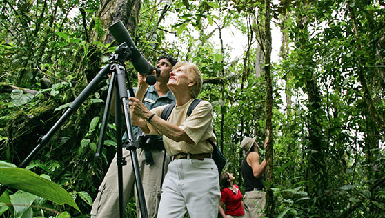 Tropical rainforest and Bird watching nature paradise