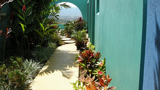 Tropical rainforest resort pathway to cottage rooms