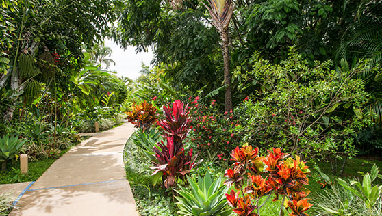 Walkways through the gardens at Xandari Resort and Spa Costa Rica