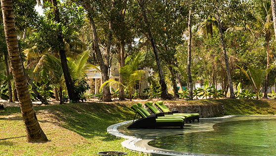 Pool with coconut trees and lawns at beach resort Kerala